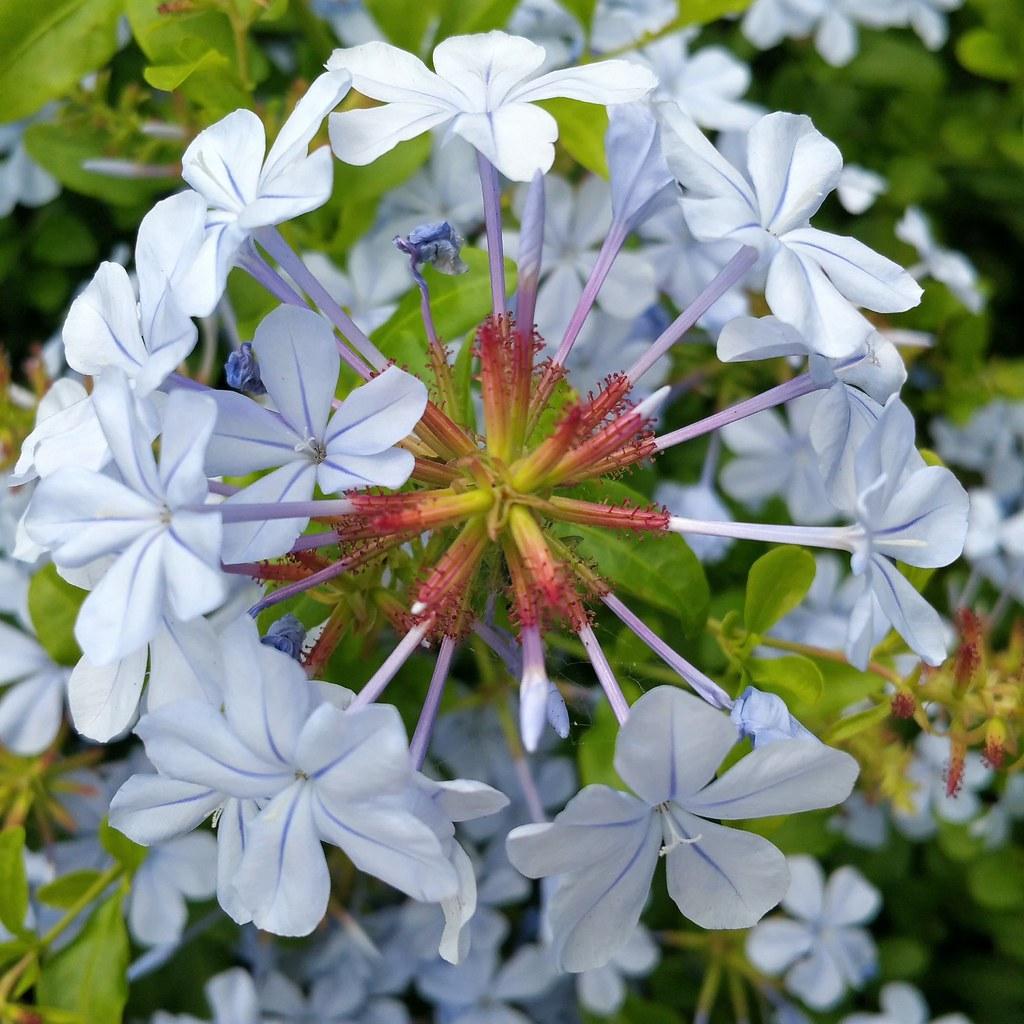 Vibrancy In The Spring Time Spring Flora Australia Co Flickr