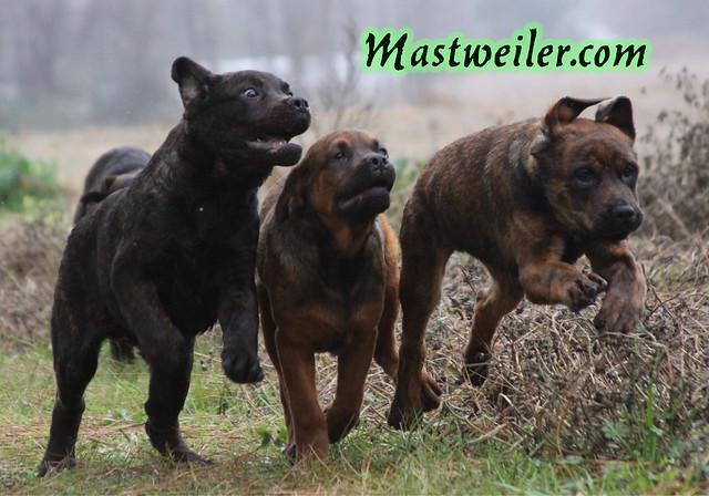 Mariah & Remington Pups, 2 Boys Available