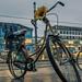 Sonnenblumenfahrrad am Bertha-von-Suttner-Platz, Bonn