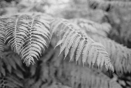 scan0035 | by Ireneusz Ciejka