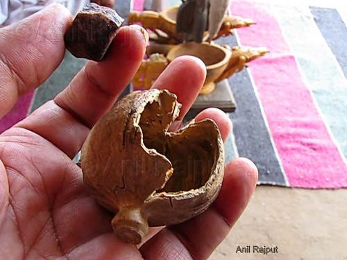 Amal Ka Dastur , Opium Granule and Poppy Bulb