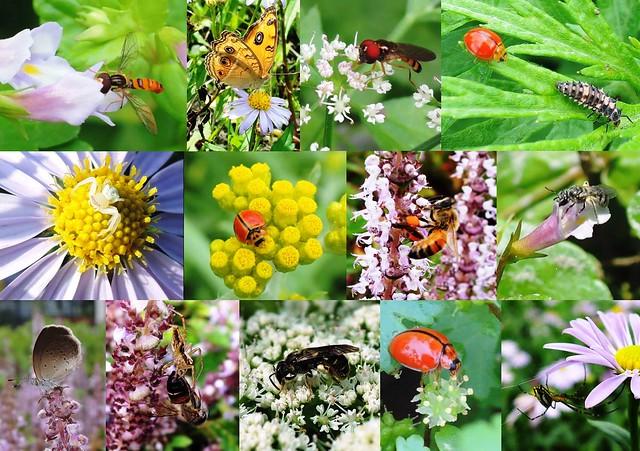 多樣化的植物孕育豐富的生物,台灣原生野花植生毯復育原生植物也重建生態服務系統。圖片來源:花蓮農改場