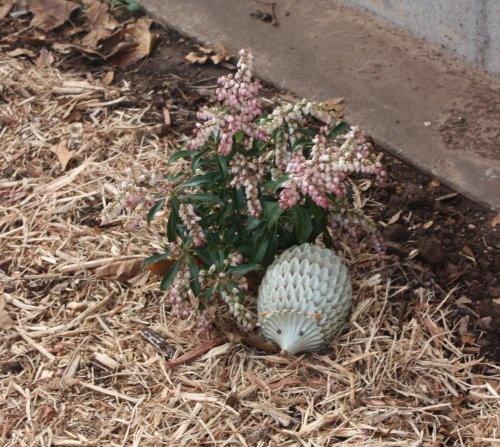 brick_bush_hedgehog