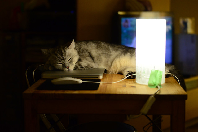 Gatito durmiendo junto a un ordenador en el Neko Bar que visitamos en Tokio