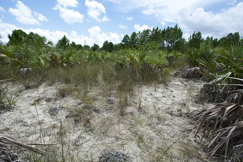 Pine rockland habitat in Florida | by USFWS/Southeast