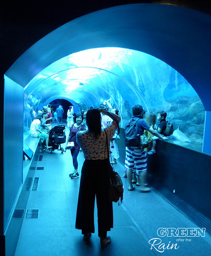 160908d Maritime Museum and SEA Aquarium _053
