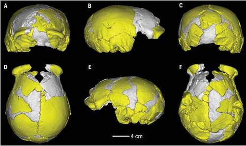 content-1488543662-denisovan-skulls.PNG