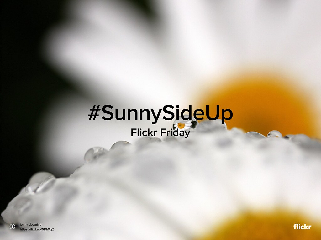 FlickrFriday #SunnySideUp