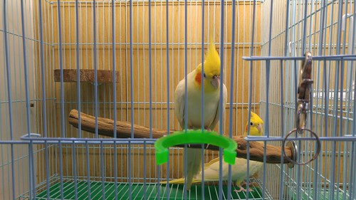 板橋寵物鳥世界寄宿