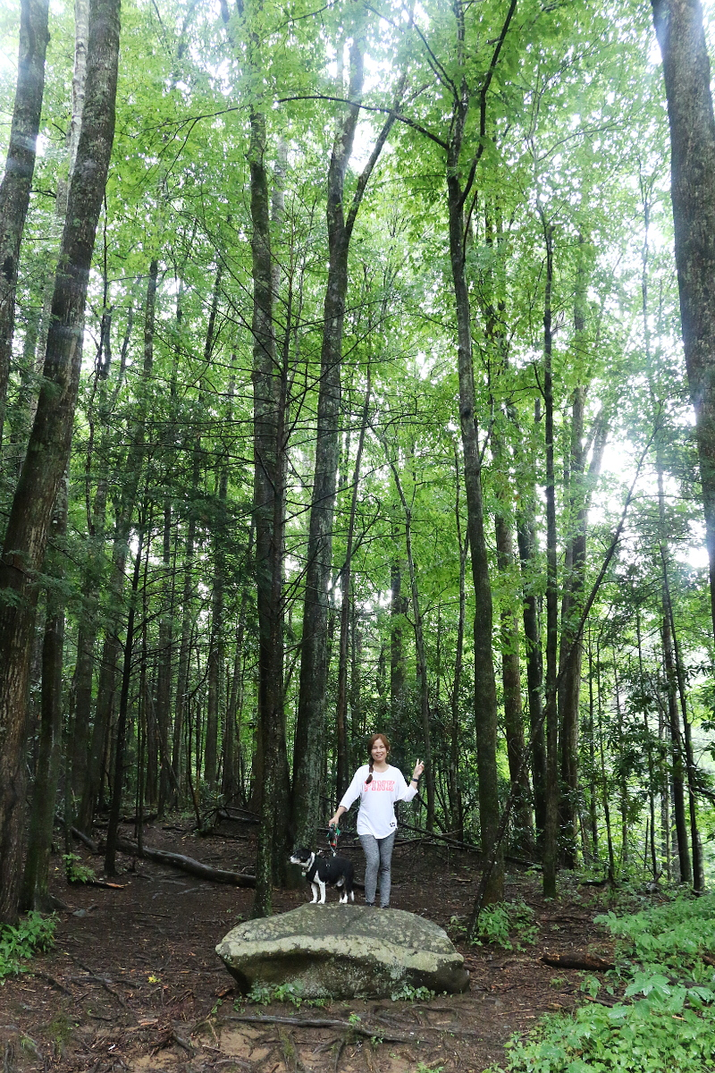 great-smoky-mountains-roarking-fork-trail-5