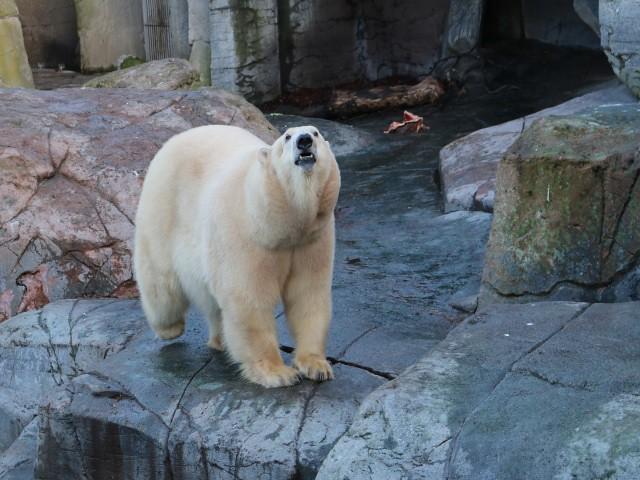 zoo copenhaga 3 obiective turistice copenhaga