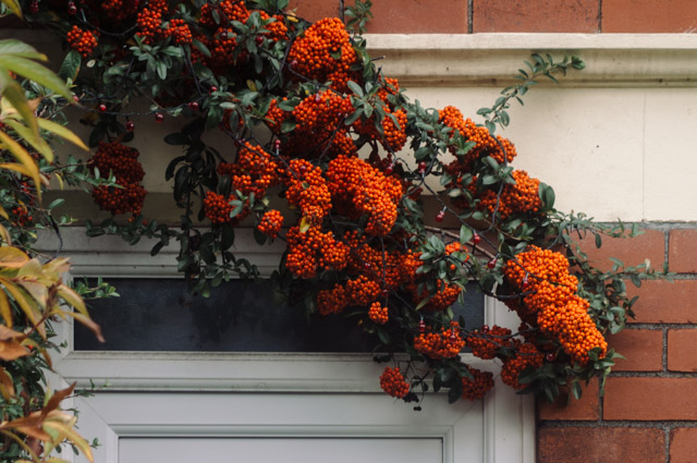 orange berries hanging over door