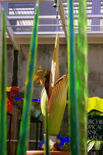 Audrey III and Chihuly Garden Glass 6 | by carvalho