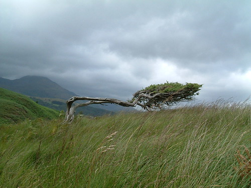 Prevailing Winds | by Kaptain Kobold