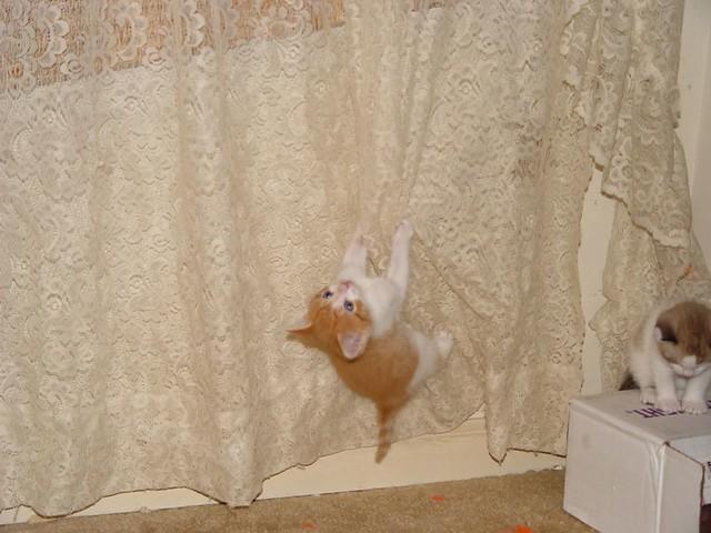 White Hanging Cat