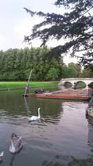 Cam swans