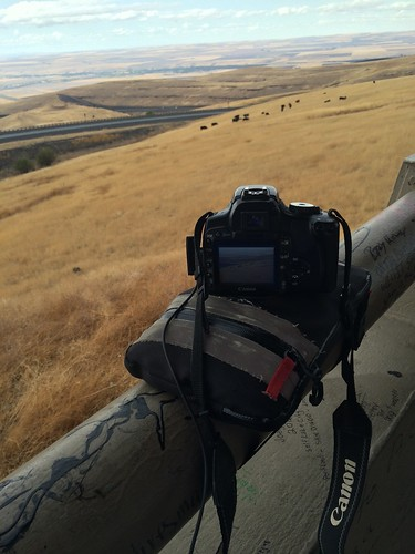 Foreground is a camera resting on a magbag, balanced on a round railing, photographing the cows that are in the background.