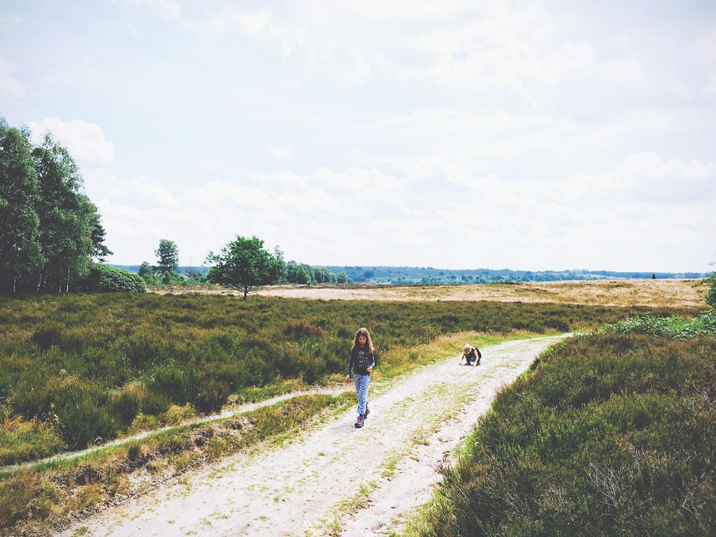 De Sallandse Heuvelrug in Overijssel wordt door It's Travel O'Clock getipt als 1 van de 17 top-bestemmingen van 2017