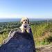 Pip on Panda's Rock at Hawk Ridge