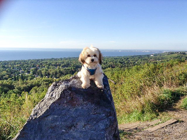 Pip at Hawk Ridge