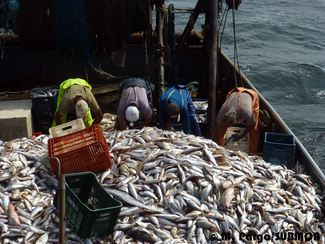 Work on board a trawler in Southern Brazil 2