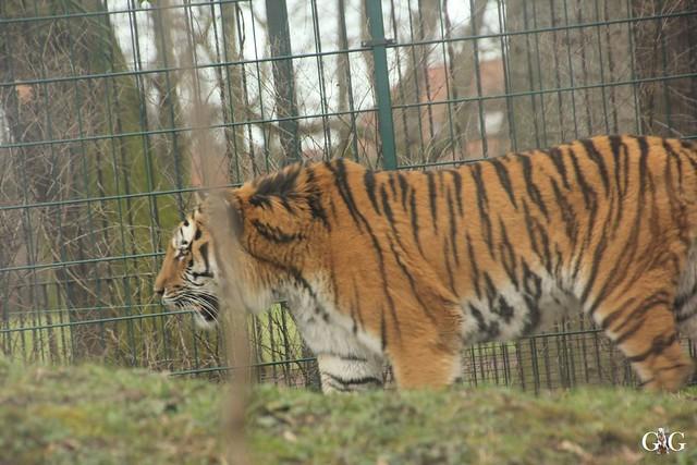 Ausflug Zoo Magdeburg 11.03.2017 Teil. 230