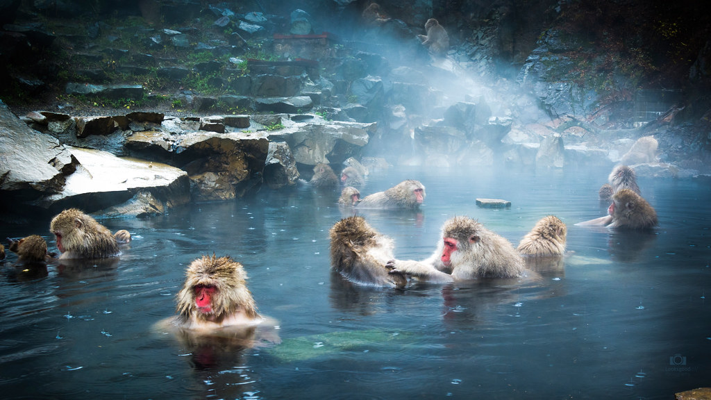 Snow Monkeys In Hot Spring 4k Wallpaper Desktop Backgrou Flickr