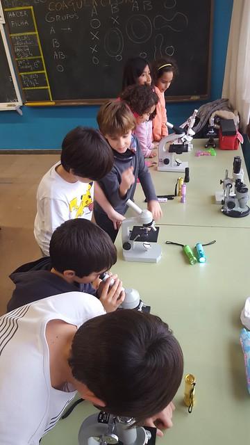 microscopio en 4º