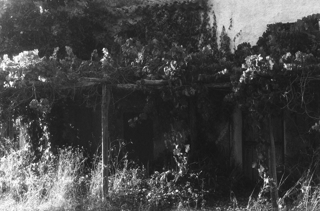 Casa en plantación III.