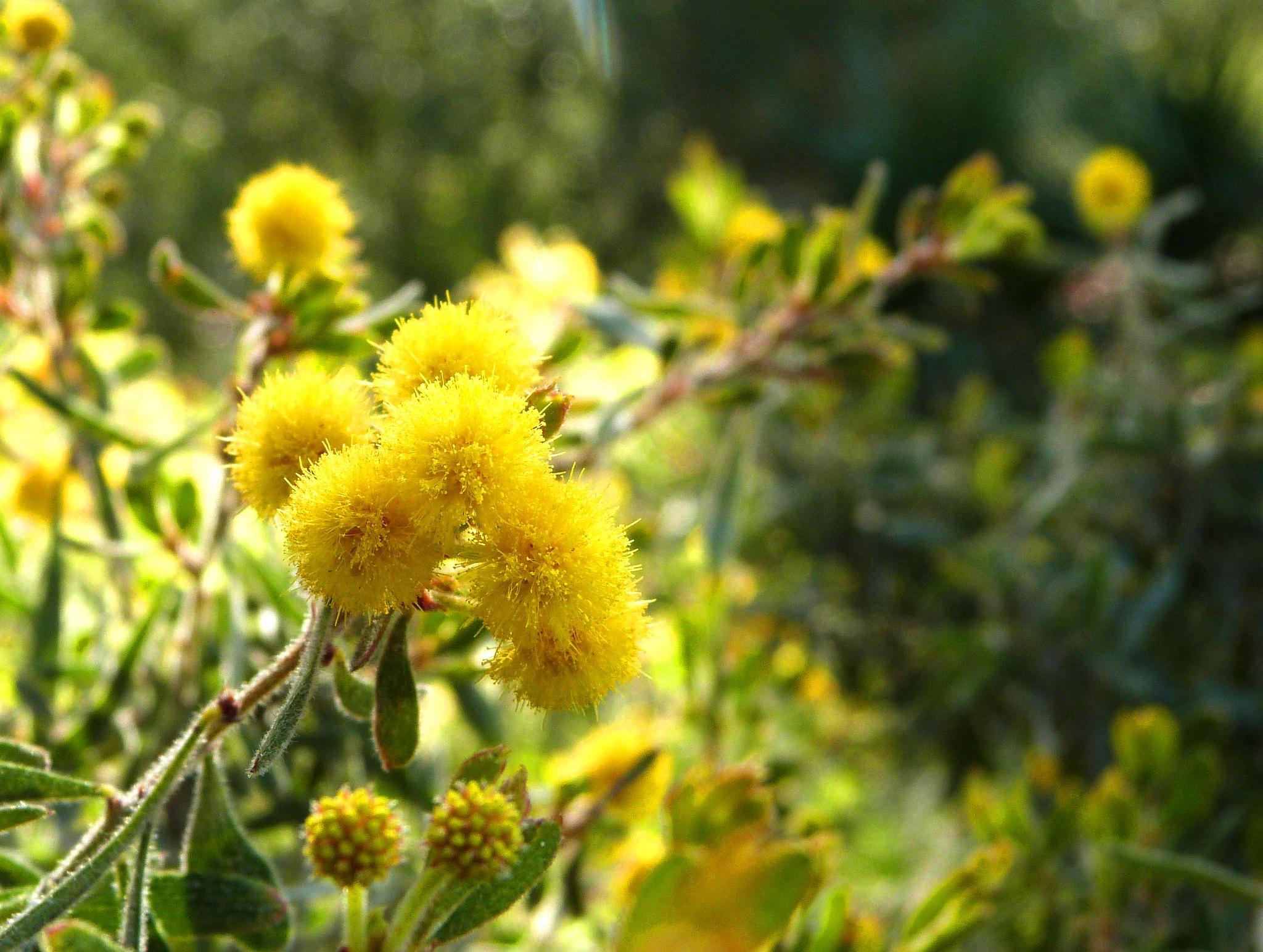 Domaine du rayol le jardin des m diterran es flickr - Domaine du rayol le jardin des mediterranees ...