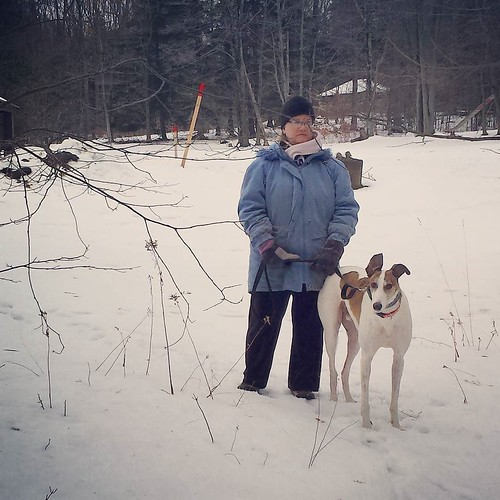 Wife and Dee-oh-gee on a nice Christmas walk! #Cane #DogsOfInstagram #greyhound #ChestnutRidge #OrchardPark #wny #winter