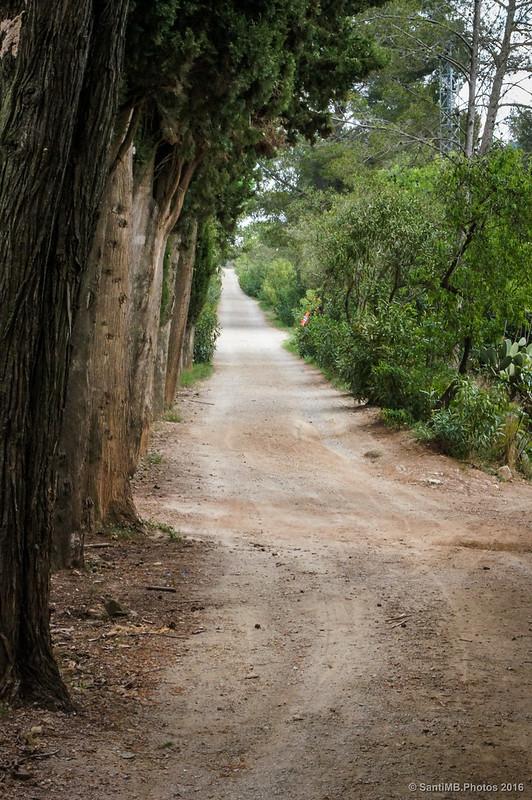 Camino del Mas de Forès a los molinos de Terrers