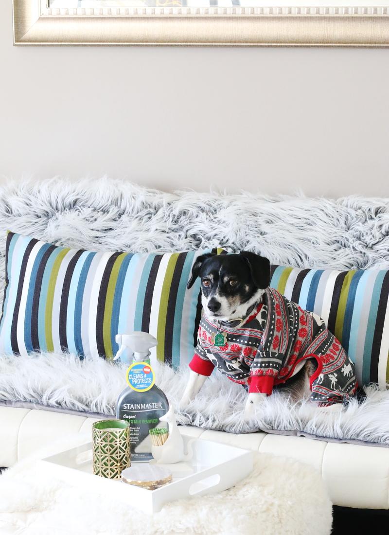 pet-pajama-living-room-sofa-stainmaster-7