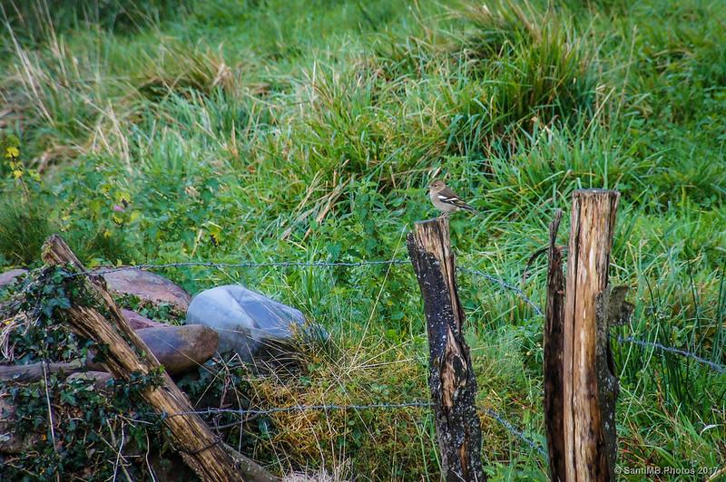 Pajarillo en el sendero de la Cascada de Xorroxin