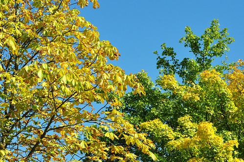 Natur- und Landschaftsschutzgebiets Unterer Neckar Maulbeerinsel Mannheim Goldener Oktober 2015 Foto Brigitte Stolle Mannheim