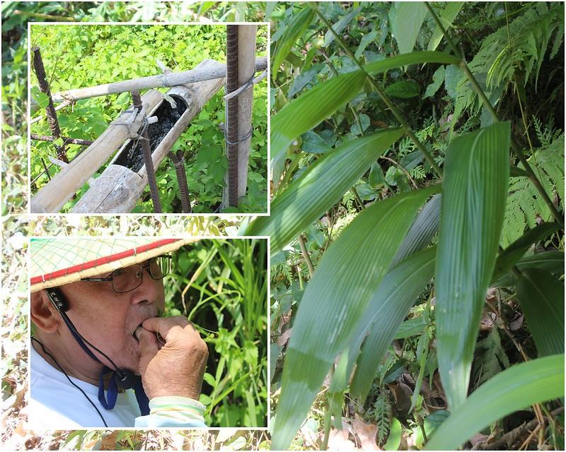 左上以水聲趕走野生動物;左下:王明源Faki;右:颱風草。攝影:廖靜蕙