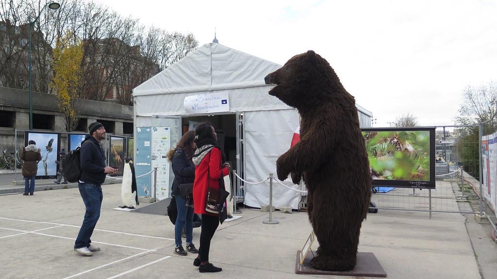 COP21 期間在巴黎街頭展出的藝術作品:棕熊。攝影:吳郁娟。