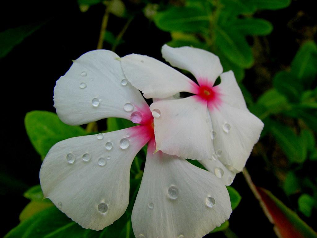 Uma Flor De Bom Dia: Quinta é Dia De Flor!!!! Feliz Quinta-flower