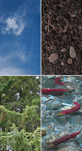 The four elements affected by chemical disposal in Envirochem: soil, air, water and life (ecological systems)