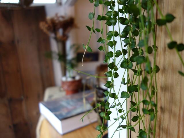 從牆上垂降的綠意@波提娜麗精品咖啡