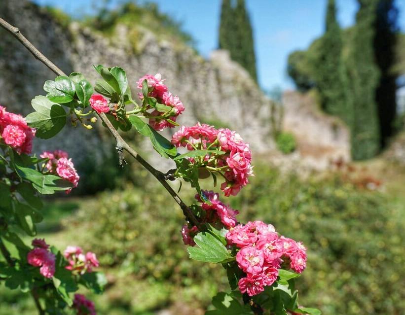 Silta Ninfan puutarhassa