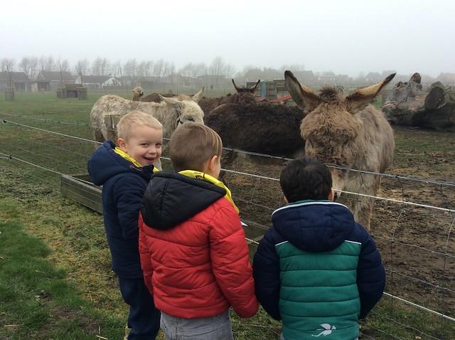 Met de peuters en K1 naar de kinderboerderij.