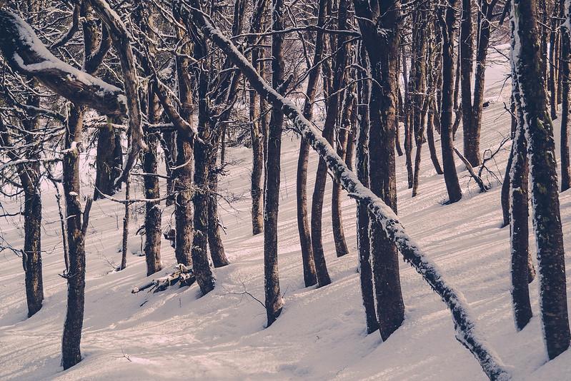 Inviernografía - Retratos de Montaña