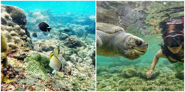 Nglambor Beach Snorkeling