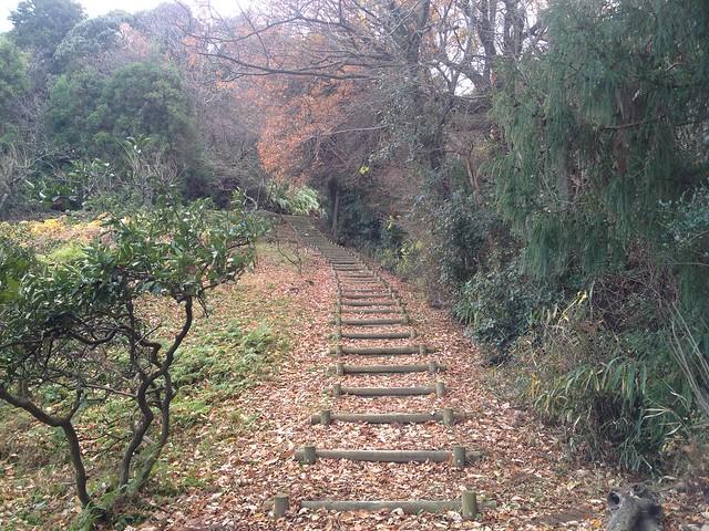月見の森 丸太階段