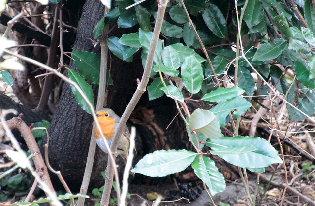 7D - Hello Robin