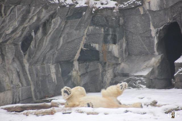 Tierpark Friedrichsfelde 08.01.20177