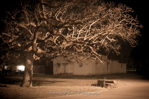 037/365 : Big tree