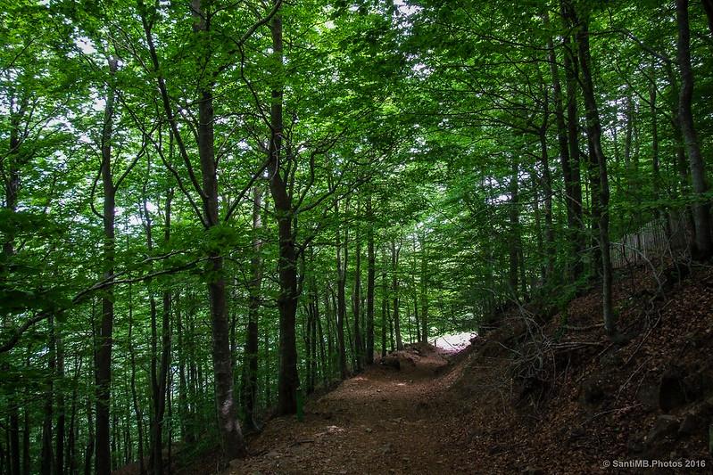 La Fageda Gran del Montseny