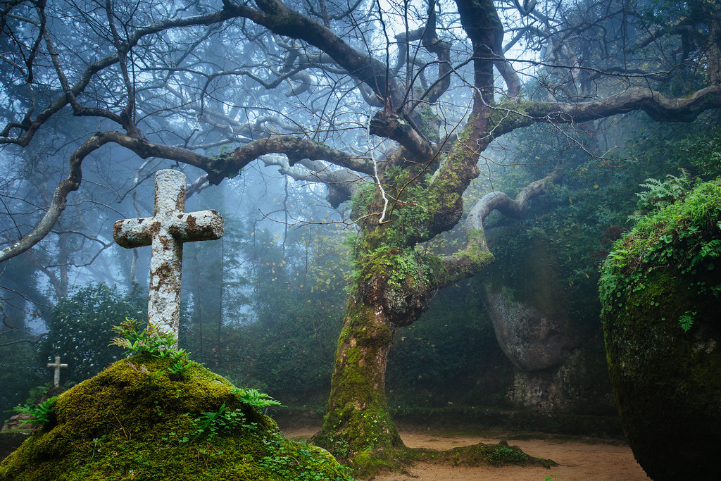 The Tree of the Capuchos